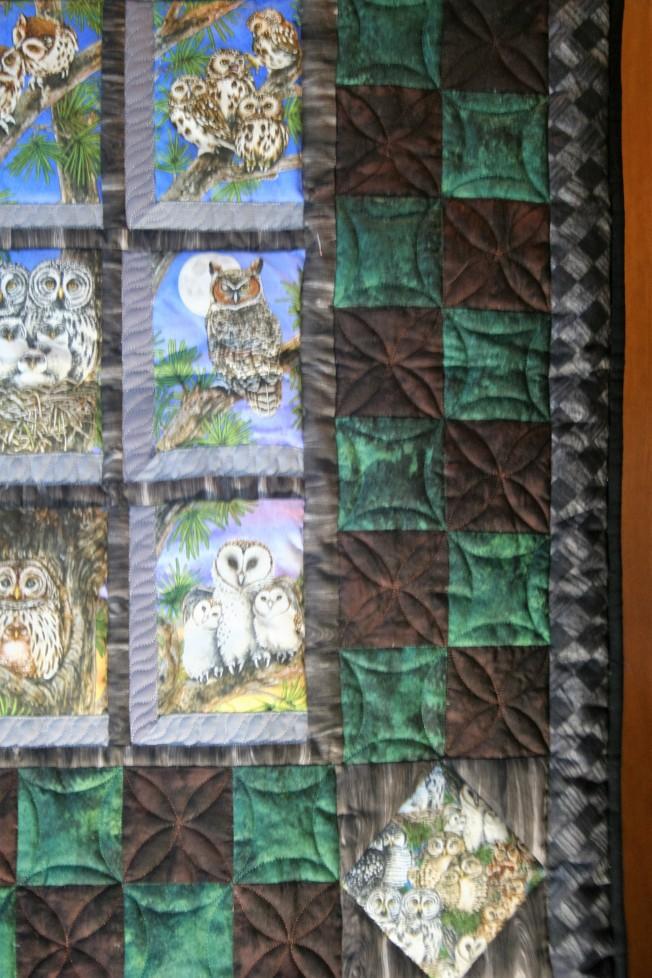 Natures Owls (close up)
