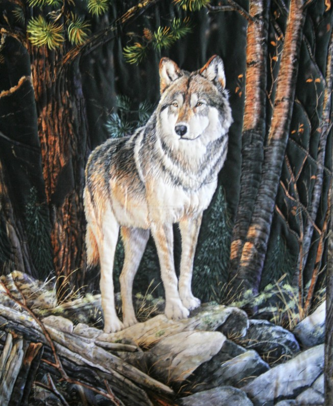 Wolf in the Woods (close up)