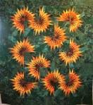Sunflower Illusions