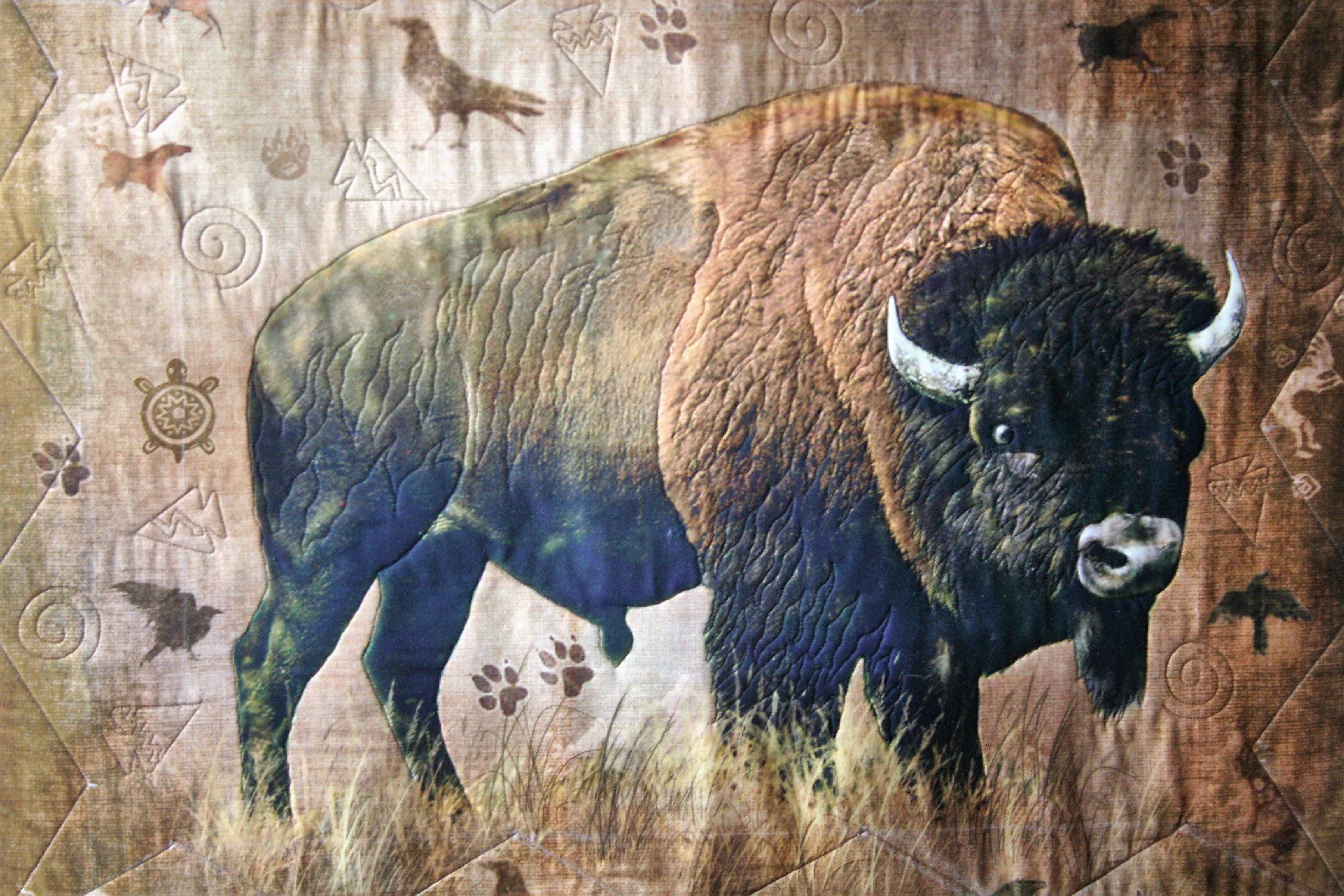 Southwest Bison (close up)